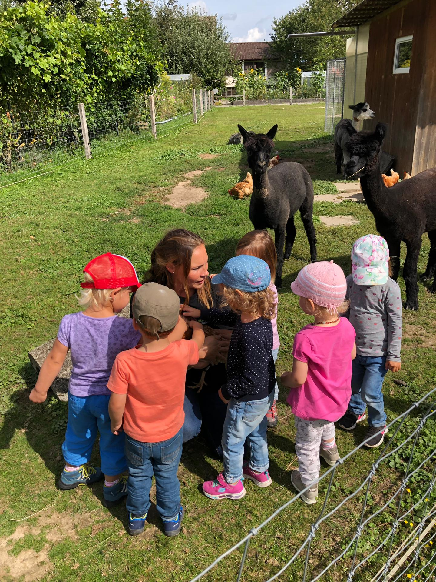 Alpakas – Naturspielgruppe Schwanden